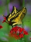 ButterflyPDphoto(zoo_4_bg_050403)